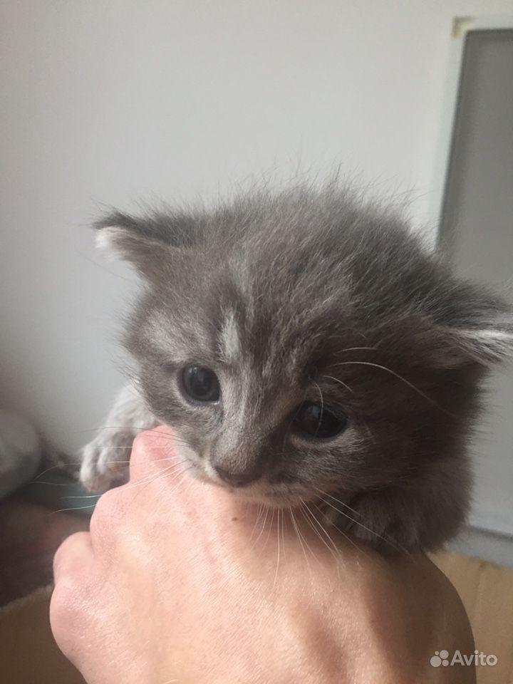 Котята в Тамбове - фотография № 1
