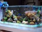 Декор для аквариума-много вариантов