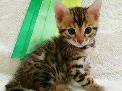 Частные объявления  котята форум total dvd как подать объявление