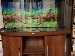 Аквариум Juwel 260 литров с тумбой в отличном сост