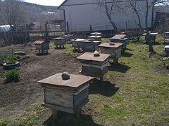 Продам пчёл 20 семей