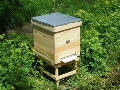 Продам 2 пчелосемьи