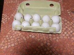 Инкубационое яйцо индийский бегунок