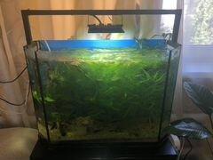 Аквариум 75 литров