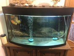 Аквариум на 250 литров с рыбками