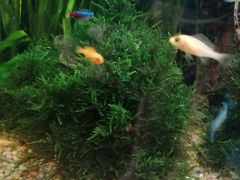 Растения, мох, рыбы