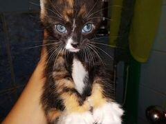 Котята 1-1,5 месяца в добрые руки