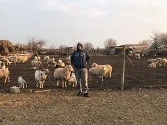 Баранчики,ярки и овце-матки