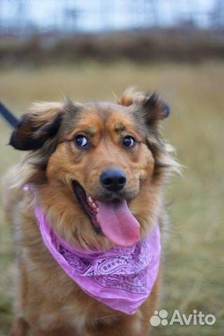 Собака в дар для семьи купить на Зозу.ру - фотография № 6
