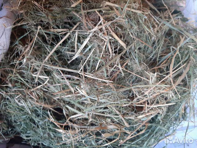 Продам сено для грызунов 89108713329 купить 1