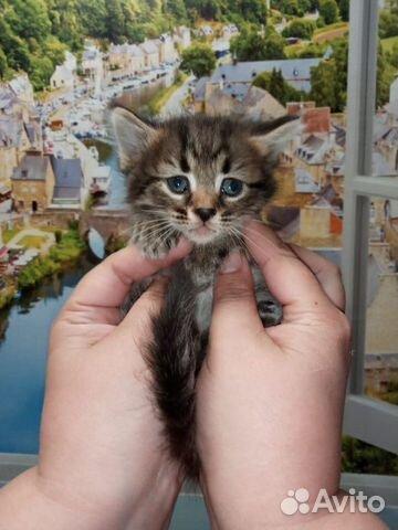 Кошка 89170821738 купить 5