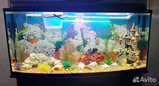 Коралл для аквариума купить 10