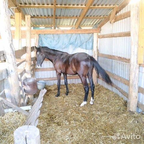 Лошадь  89280884007 купить 5