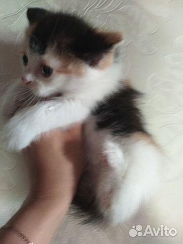 Подарю котят  купить 2