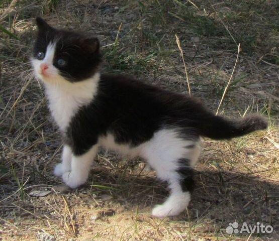 Котенок в добрые руки  89292344145 купить 5
