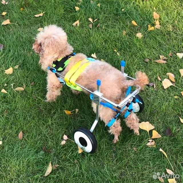 Инвалидная коляска для собак  89529299457 купить 2