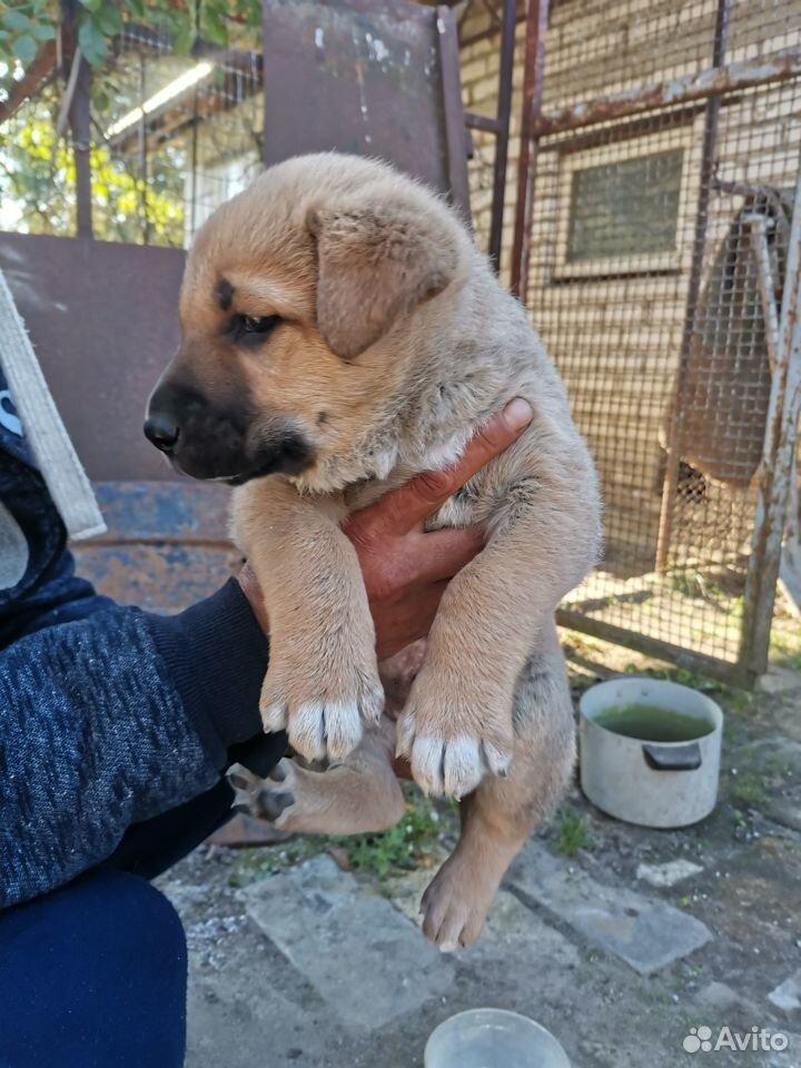 Собака  89118676240 купить 4