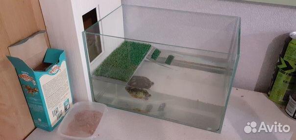 Черепашка с террариумом  89033726825 купить 1