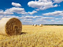 Продается сельхоз предприятие