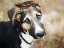Классный щенок 4 месяцев, метис овчарки