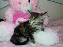Котенок Карамелька (младшая)